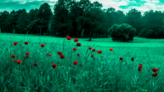 Imagen de Fotografía y Retoque fotográfico